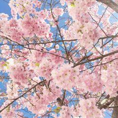 freetoedit bloom