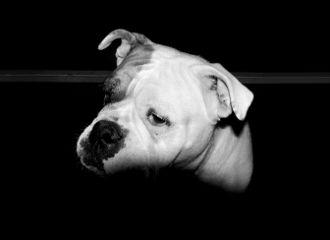 blackandwhite portrait dog