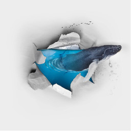 freetoedit 3d fantasy whale water